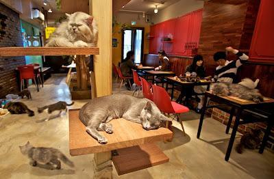 Cat Cafe Neirobi