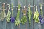 biljke za detoksifikaciju