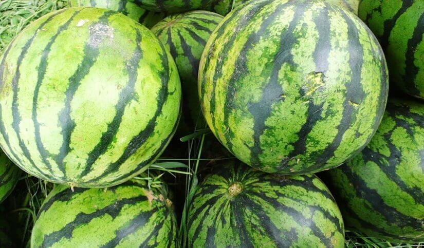 Kako svaki put odabrati savršenu lubenicu?
