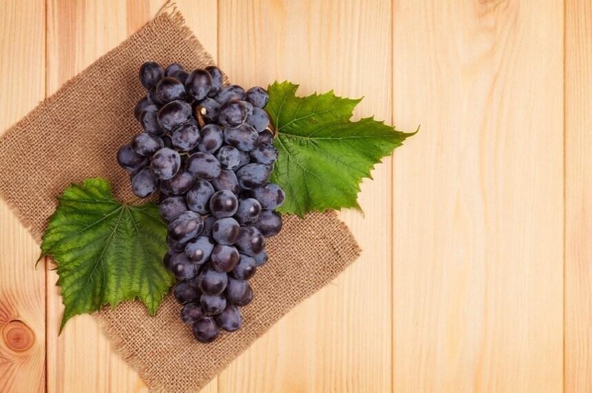 crno-grozde