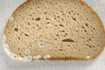 pljesniva-kriska-kruha