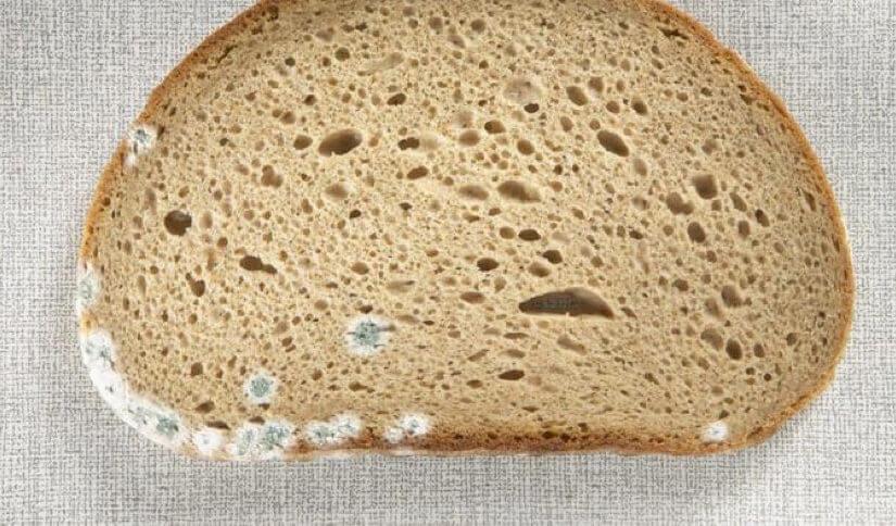 Koliko je zapravo štetno konzumirati pljesnivi kruh?